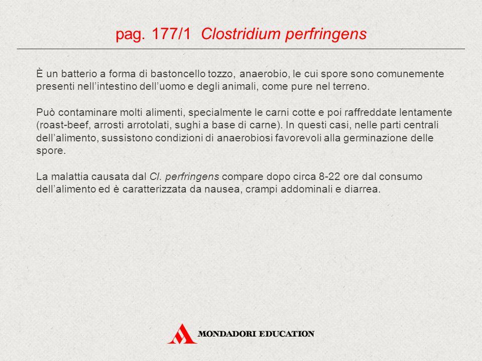 pag. 177/1 Clostridium perfringens