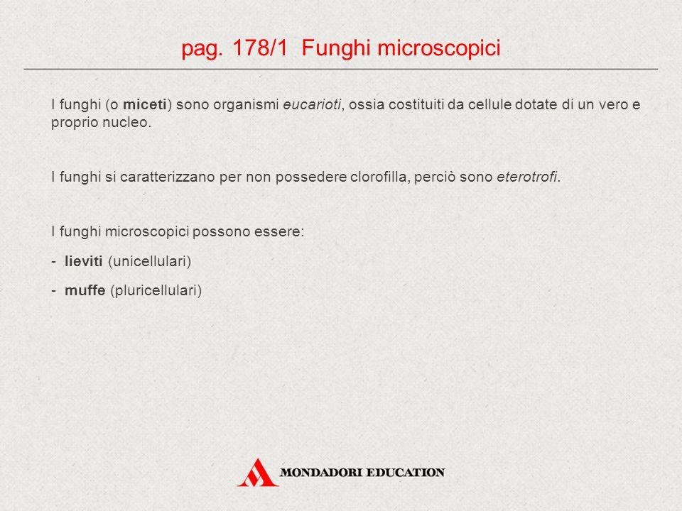 pag. 178/1 Funghi microscopici