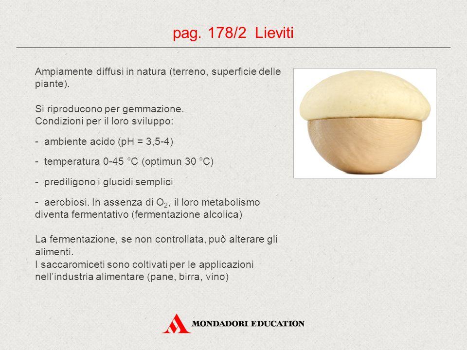 pag. 178/2 Lieviti Ampiamente diffusi in natura (terreno, superficie delle piante). Si riproducono per gemmazione.
