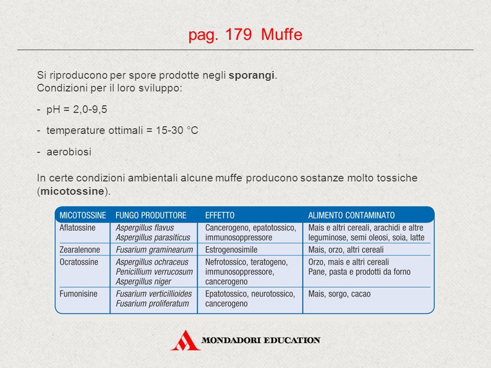pag. 179 Muffe Si riproducono per spore prodotte negli sporangi.