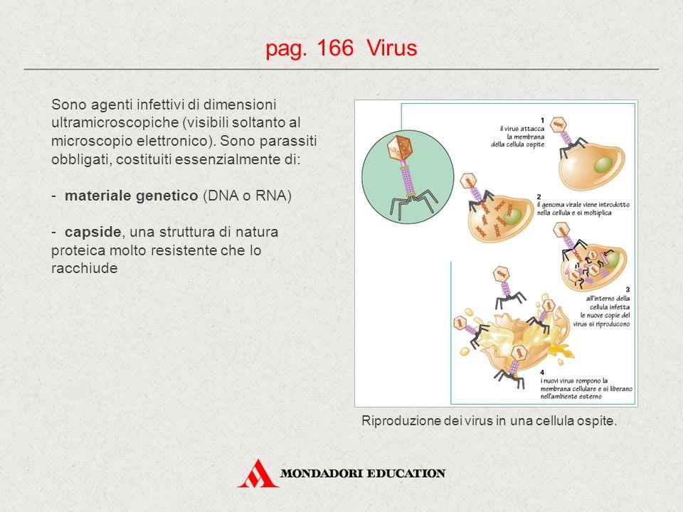 pag. 166 Virus