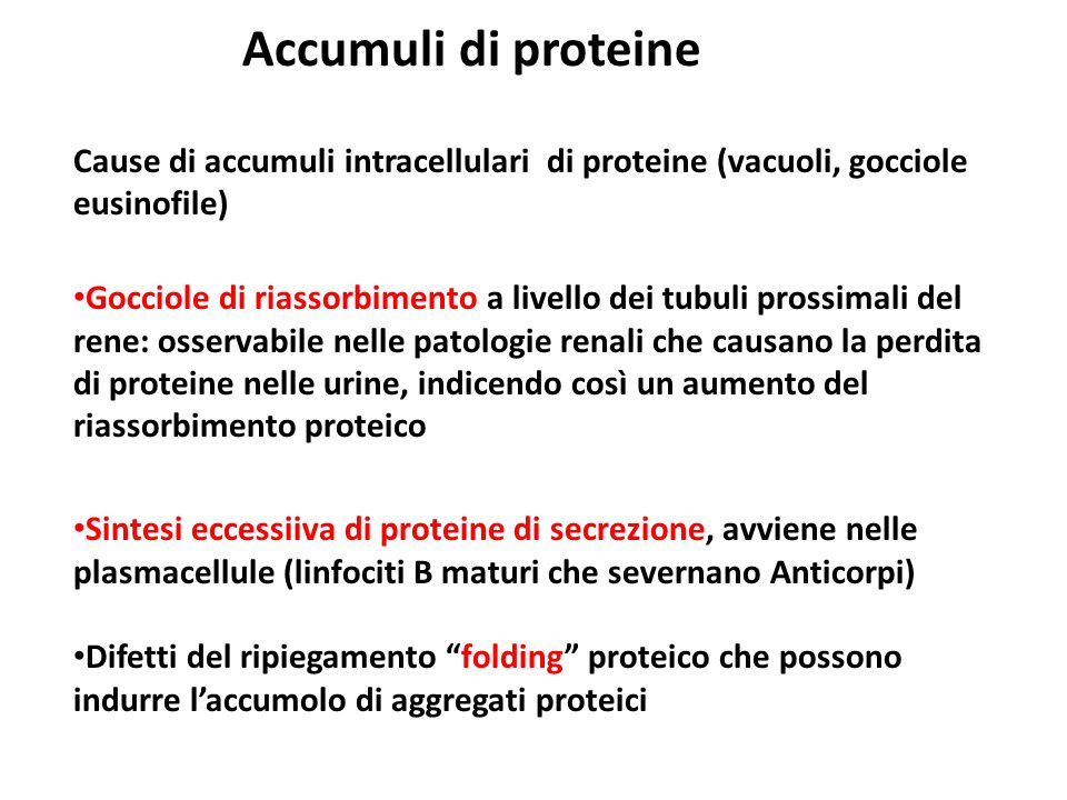 Accumuli di proteine Cause di accumuli intracellulari di proteine (vacuoli, gocciole eusinofile)
