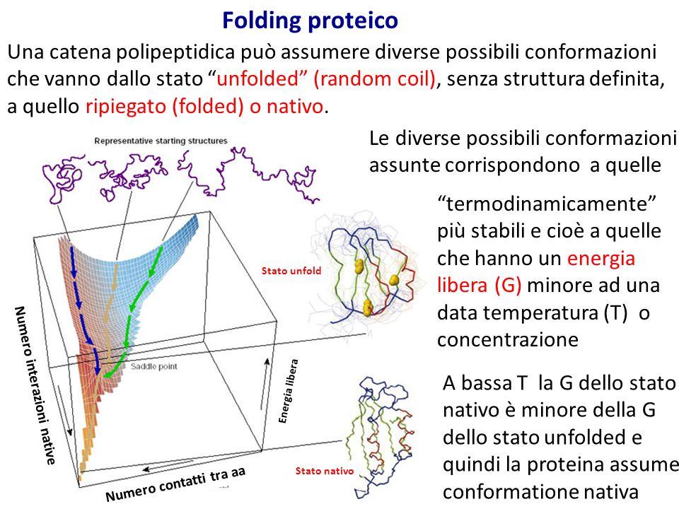 Folding proteico