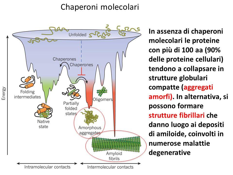 Chaperoni molecolari