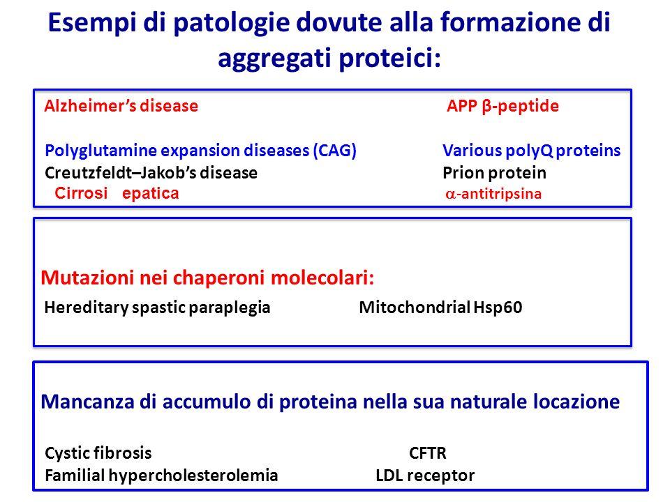 Esempi di patologie dovute alla formazione di aggregati proteici: