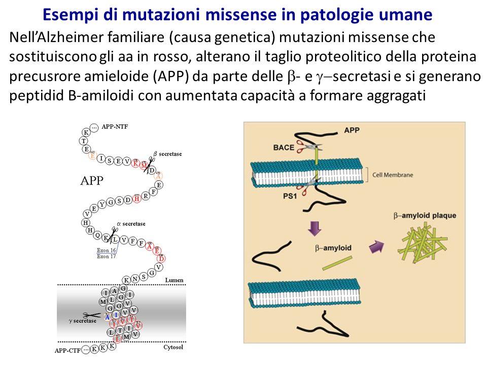 Esempi di mutazioni missense in patologie umane