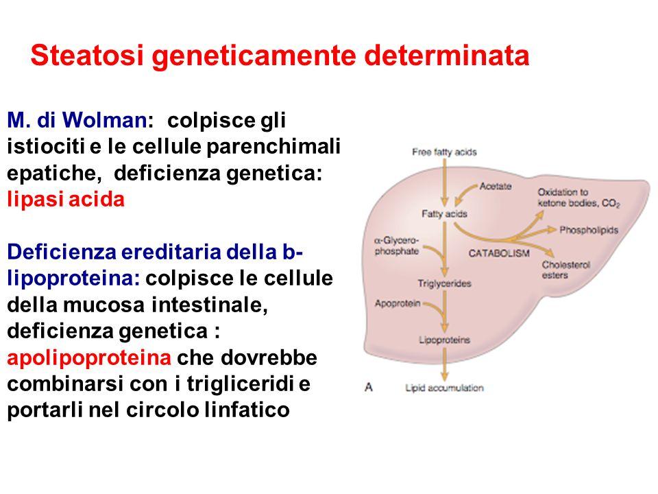 Steatosi geneticamente determinata