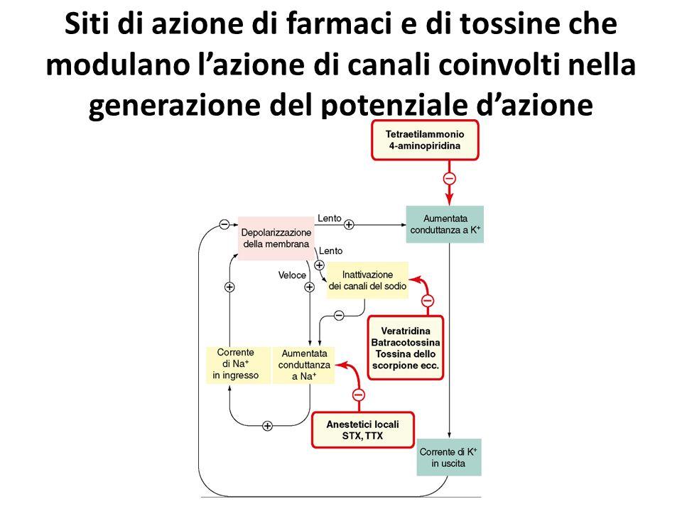 Siti di azione di farmaci e di tossine che modulano l'azione di canali coinvolti nella generazione del potenziale d'azione