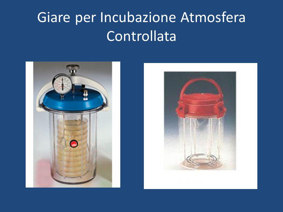 Giare per Incubazione Atmosfera Controllata