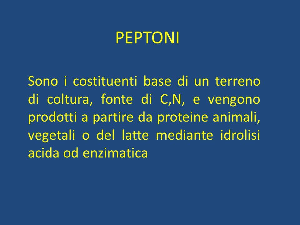 PEPTONI