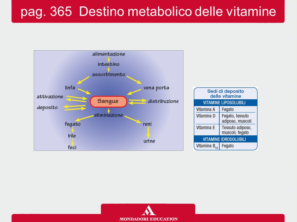 pag. 365 Destino metabolico delle vitamine