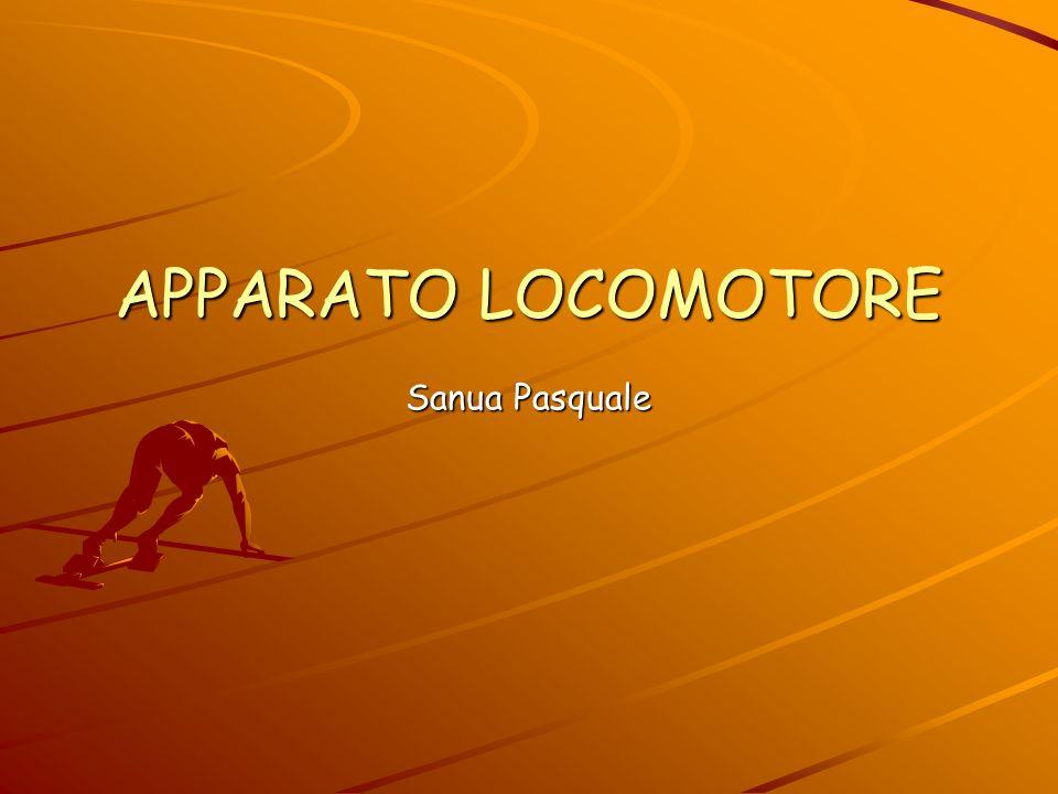 APPARATO LOCOMOTORE Sanua Pasquale
