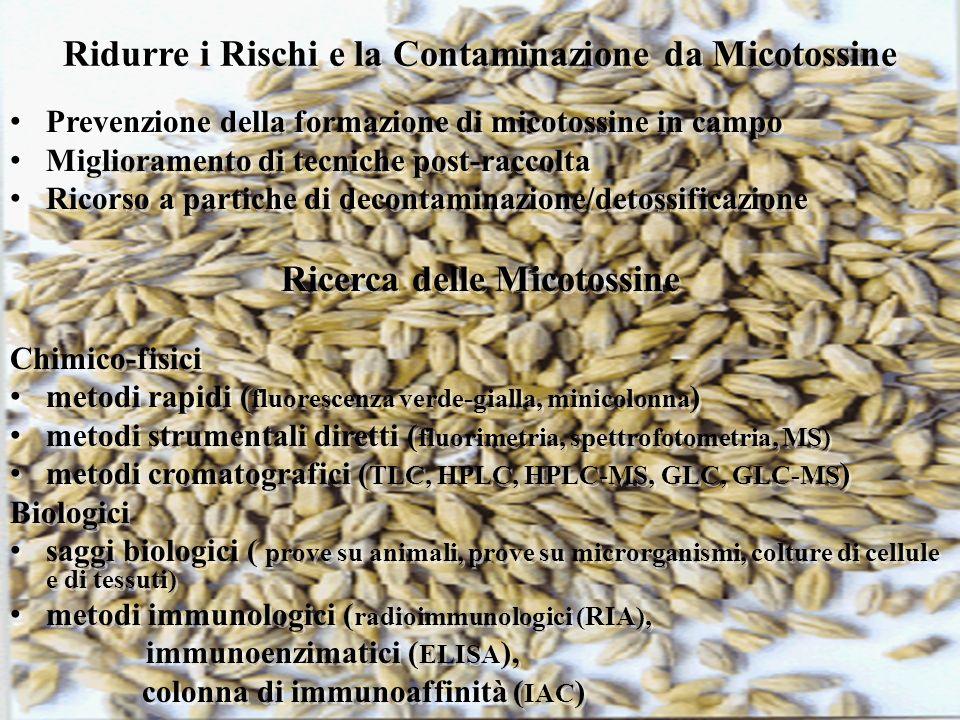 Ridurre i Rischi e la Contaminazione da Micotossine
