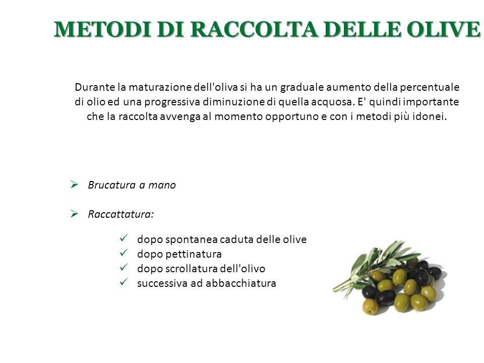 Metodi di raccolta delle olive