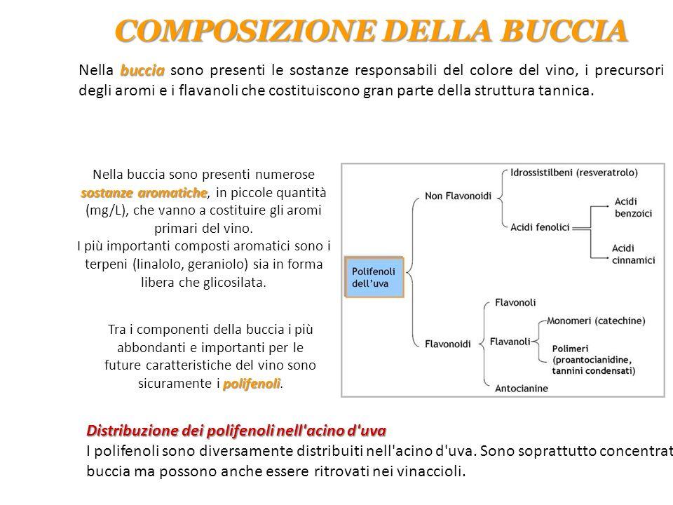 COMPOSIZIONE DELLA BUCCIA