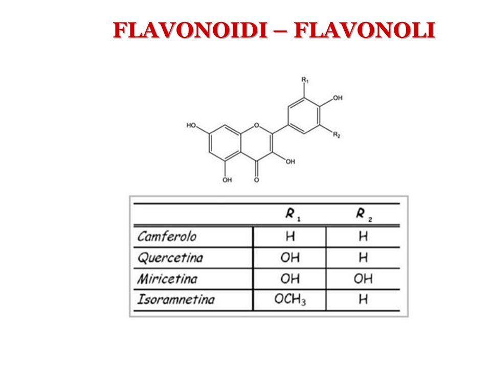 FLAVONOIDI – FLAVONOLI
