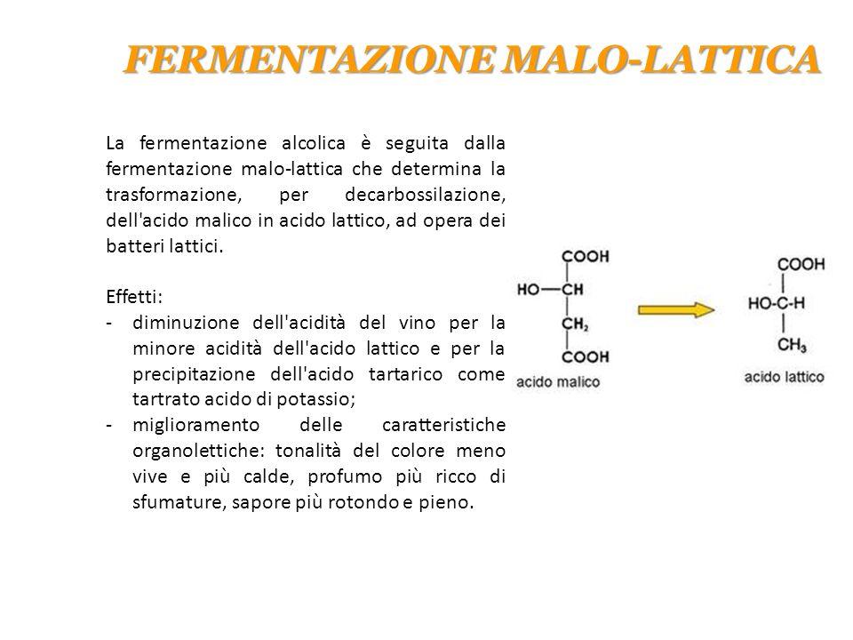 FERMENTAZIONE MALO-LATTICA