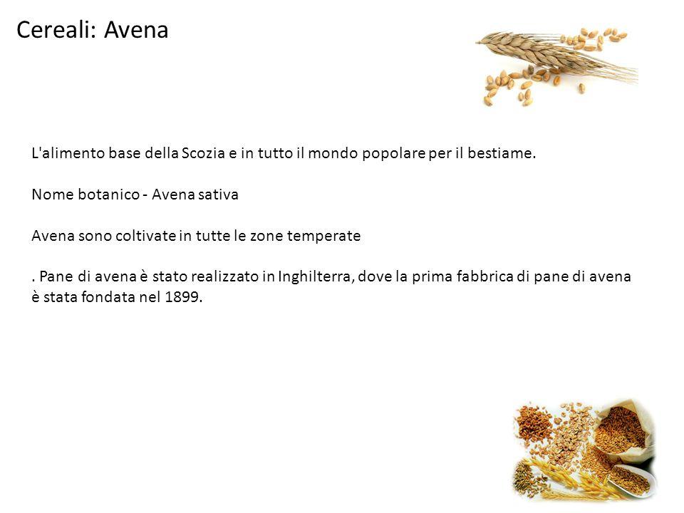 Cereali: Avena