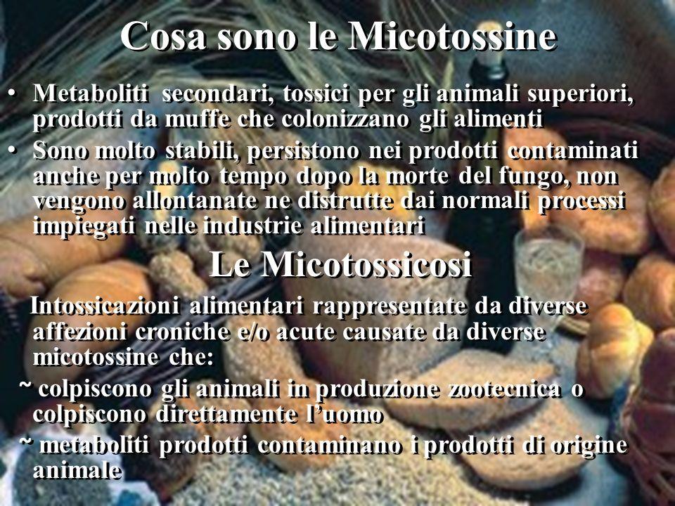 Cosa sono le Micotossine