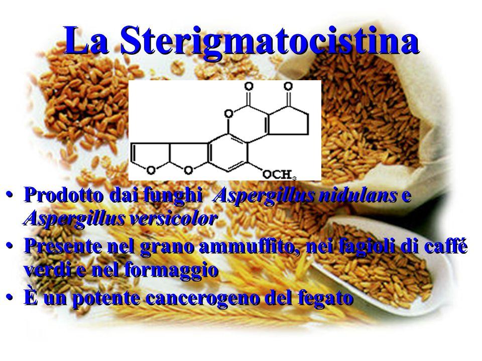 La Sterigmatocistina Prodotto dai funghi Aspergillus nidulans e Aspergillus versicolor.
