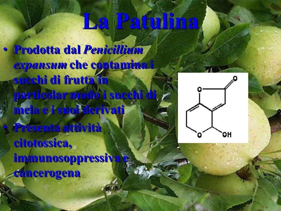 La Patulina Prodotta dal Penicillium expansum che contamina i succhi di frutta in particolar modo i succhi di mela e i suoi derivati.