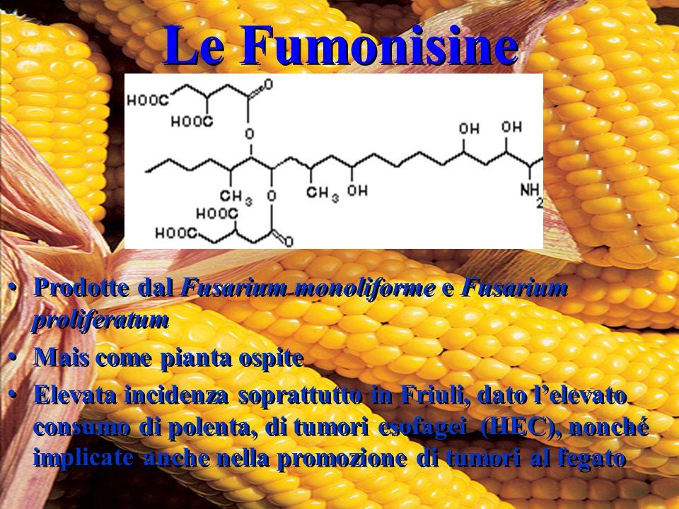 Le Fumonisine Prodotte dal Fusarium monoliforme e Fusarium proliferatum. Mais come pianta ospite.