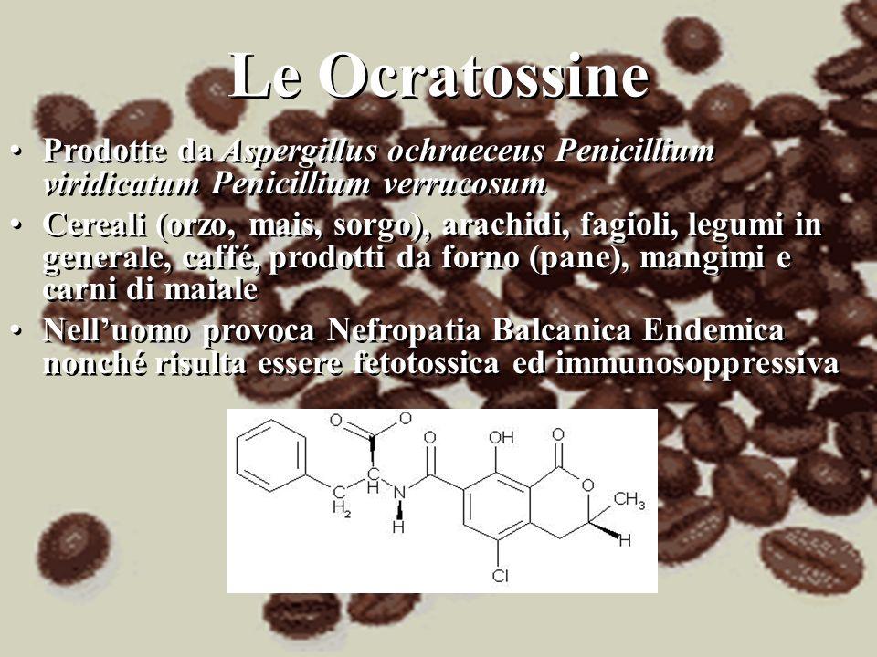 Le Ocratossine Prodotte da Aspergillus ochraeceus Penicillium viridicatum Penicillium verrucosum.