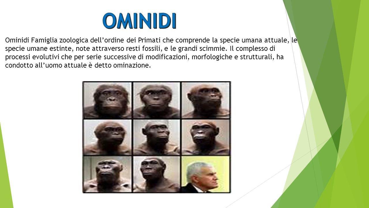 OMINIDI
