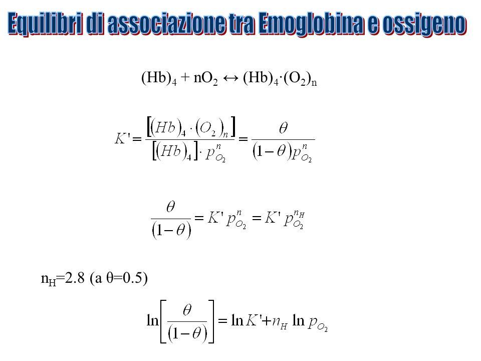 Equilibri di associazione tra Emoglobina e ossigeno