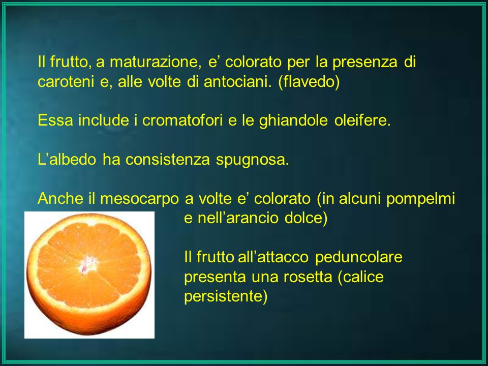 Il frutto, a maturazione, e' colorato per la presenza di caroteni e, alle volte di antociani. (flavedo)