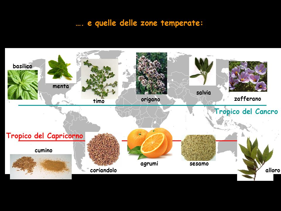 …. e quelle delle zone temperate: