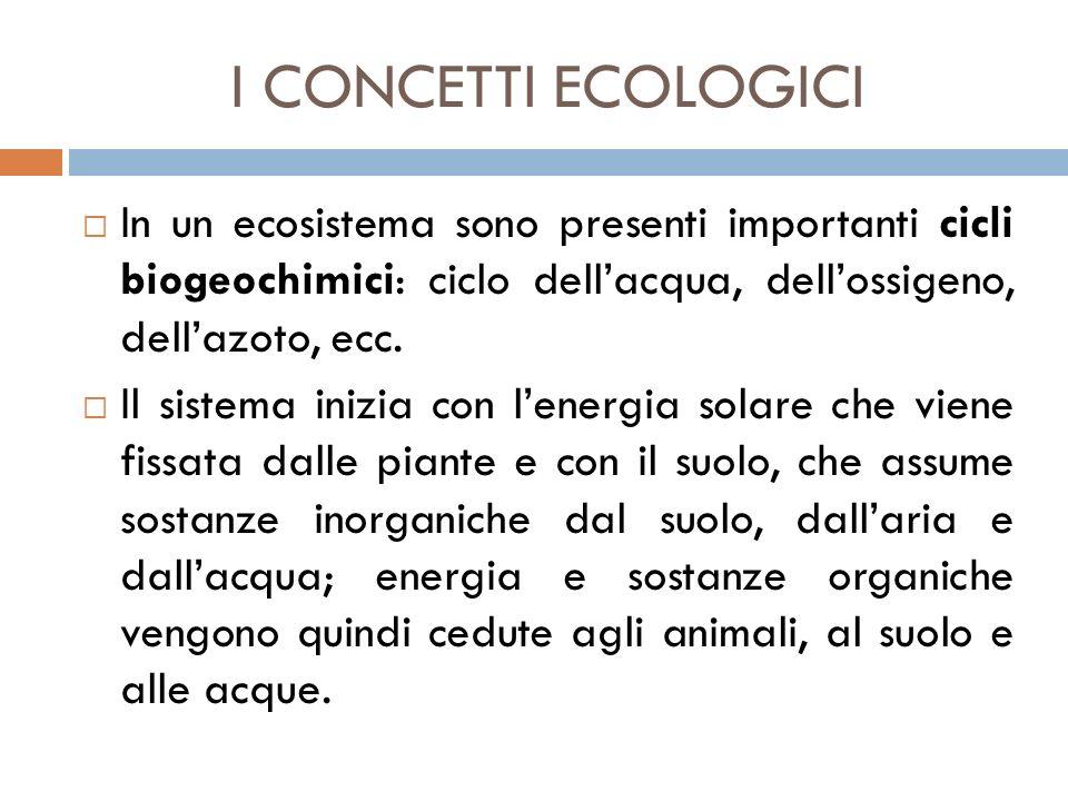 I CONCETTI ECOLOGICI In un ecosistema sono presenti importanti cicli biogeochimici: ciclo dell'acqua, dell'ossigeno, dell'azoto, ecc.