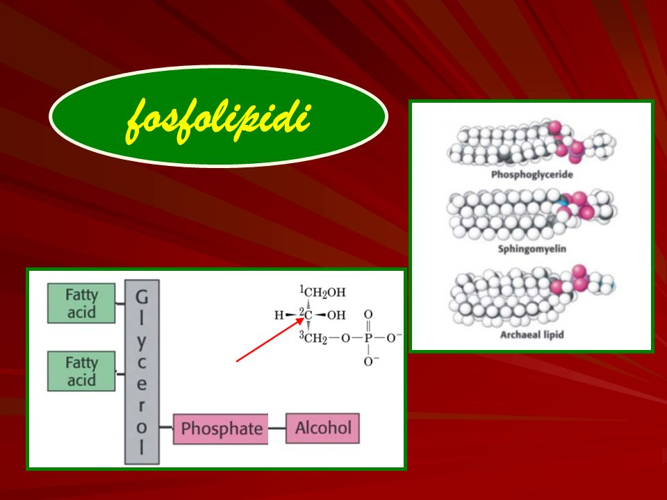 fosfolipidi