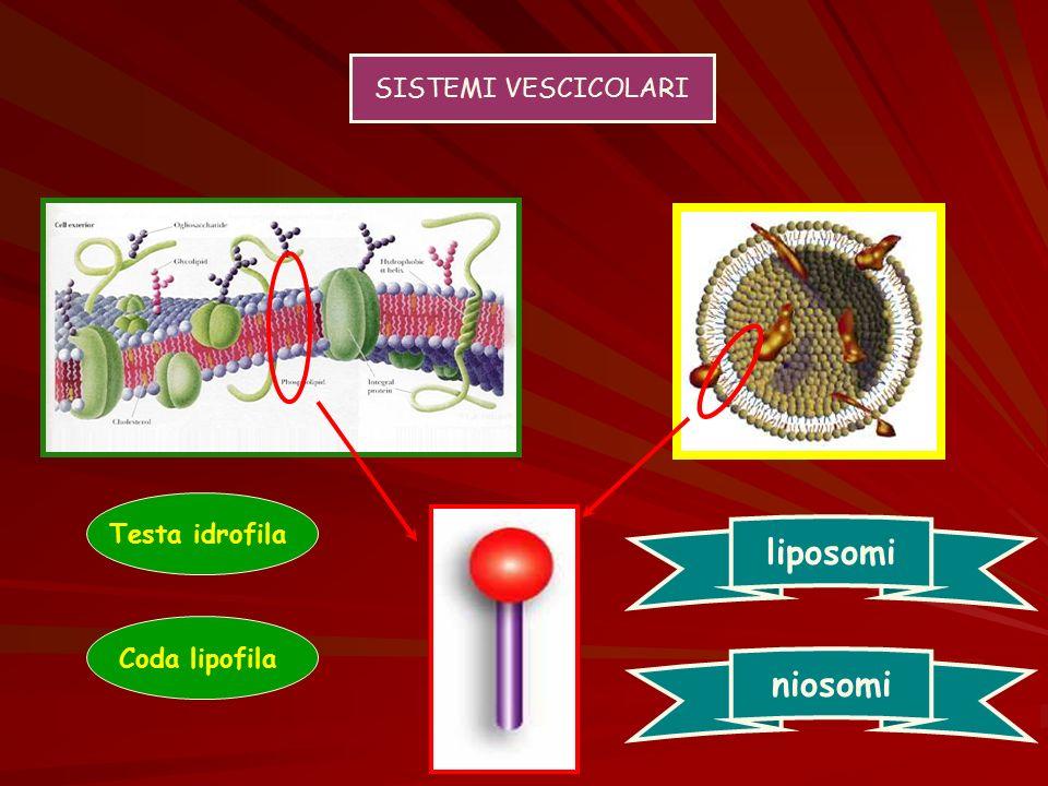 SISTEMI VESCICOLARI Testa idrofila liposomi Coda lipofila niosomi