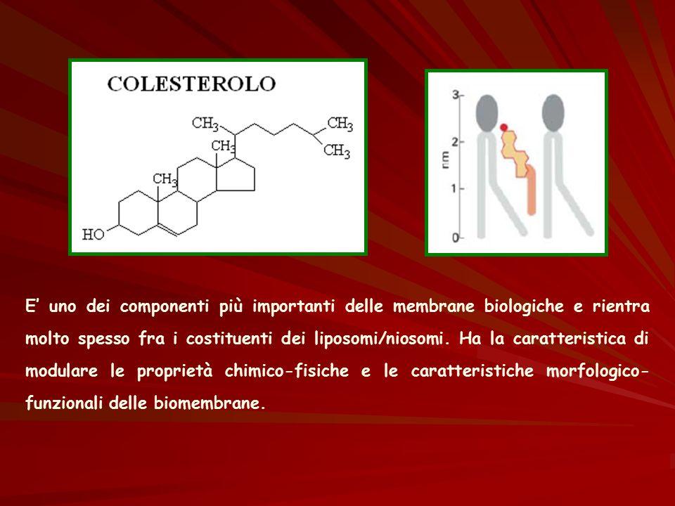 E' uno dei componenti più importanti delle membrane biologiche e rientra molto spesso fra i costituenti dei liposomi/niosomi.