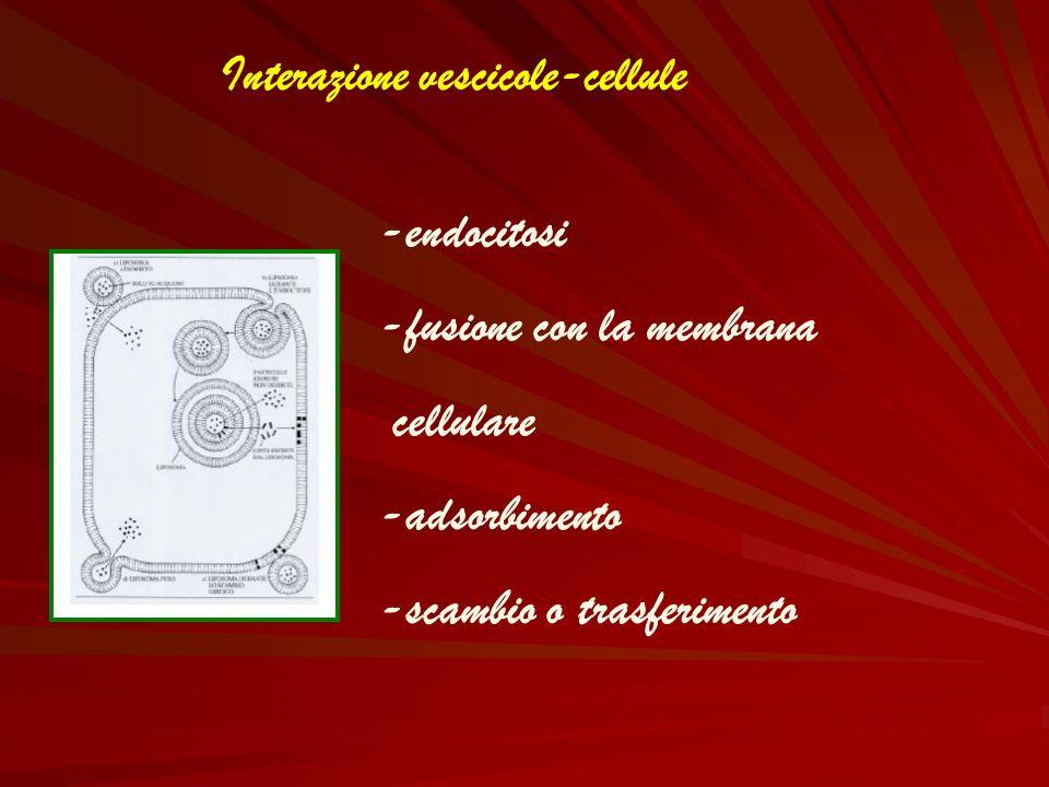 Interazione vescicole-cellule
