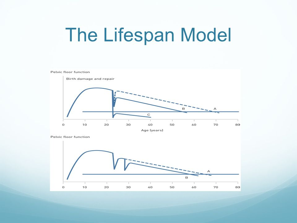 The Lifespan Model