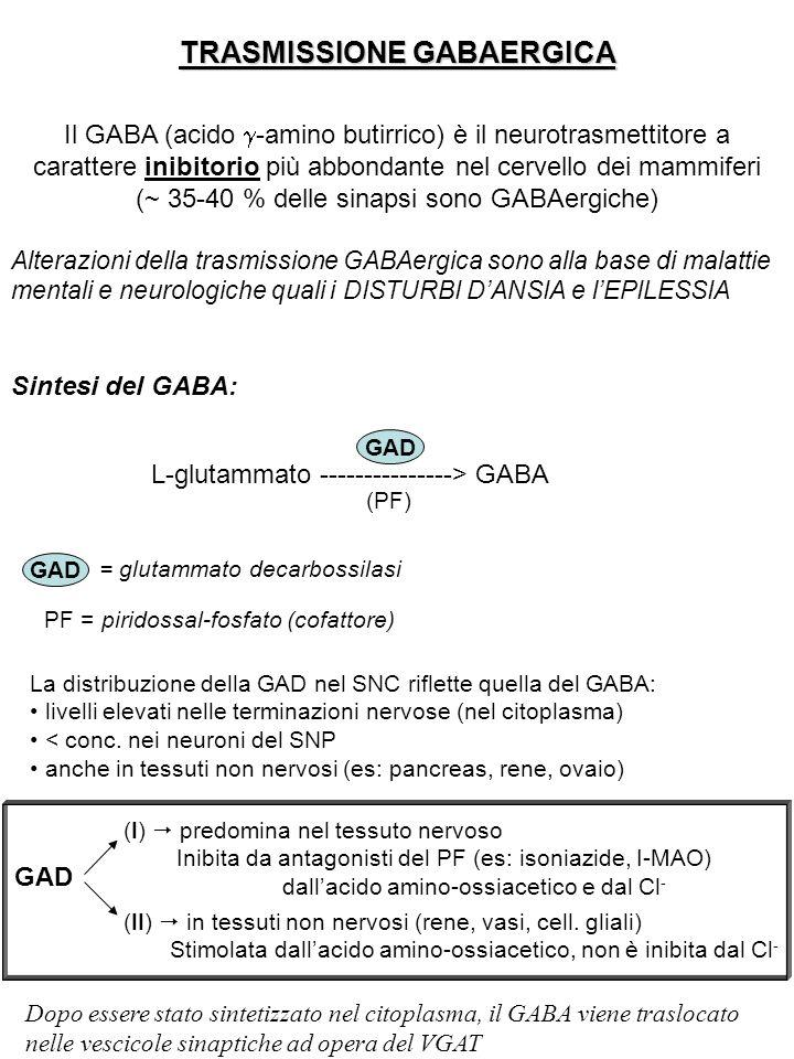 TRASMISSIONE GABAERGICA