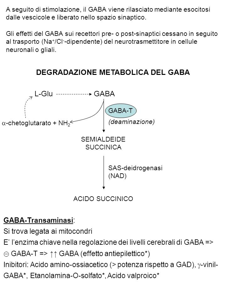 DEGRADAZIONE METABOLICA DEL GABA