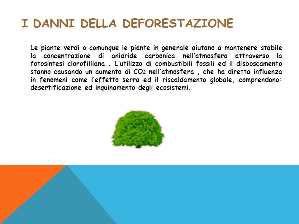 I danni della deforestazione