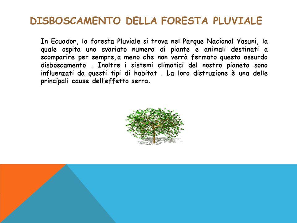 DISBOSCAMENTO DELLA FORESTA PLUVIALE