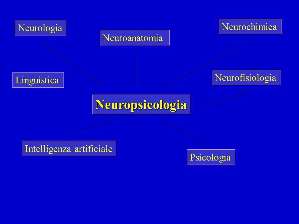 Neuropsicologia Neurochimica Neurologia Neuroanatomia Neurofisiologia