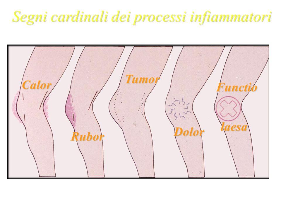 Segni cardinali dei processi infiammatori