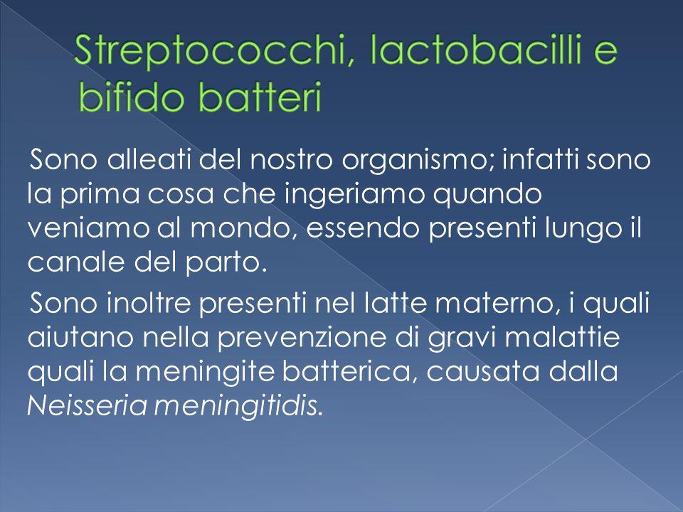Streptococchi, lactobacilli e bifido batteri
