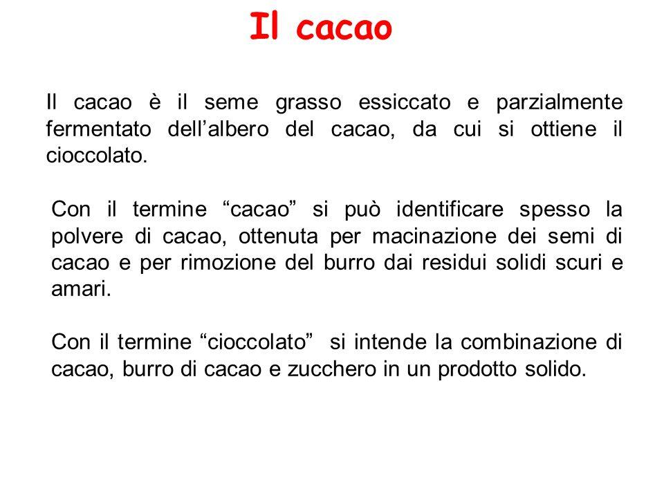 Il cacao Il cacao è il seme grasso essiccato e parzialmente fermentato dell'albero del cacao, da cui si ottiene il cioccolato.
