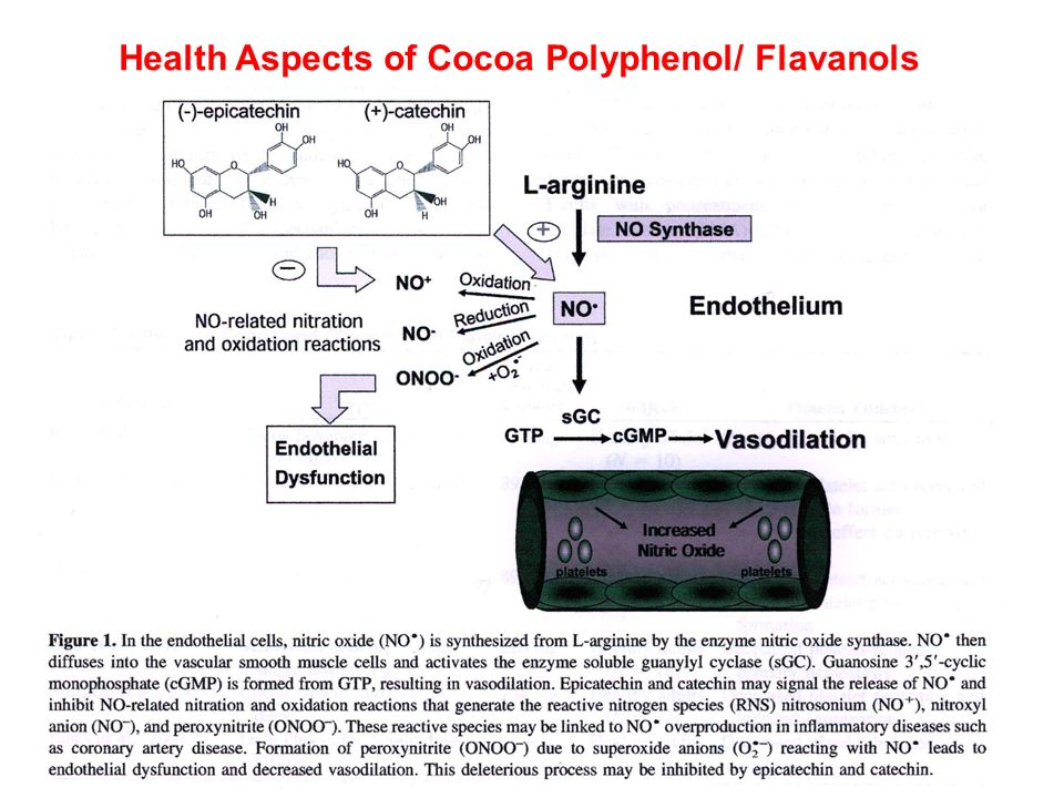 Health Aspects of Cocoa Polyphenol/ Flavanols