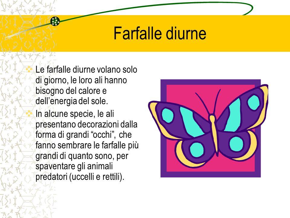 Farfalle diurne Le farfalle diurne volano solo di giorno, le loro ali hanno bisogno del calore e dell'energia del sole.