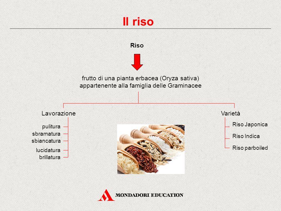 Il riso Riso. frutto di una pianta erbacea (Oryza sativa) appartenente alla famiglia delle Graminacee.