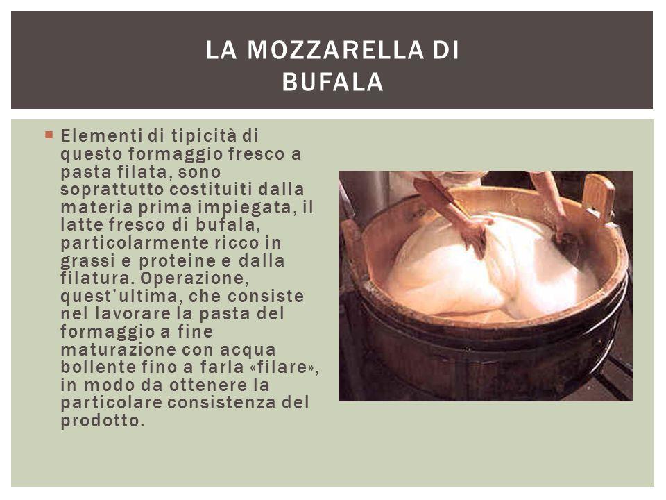 La mozzarella di Bufala
