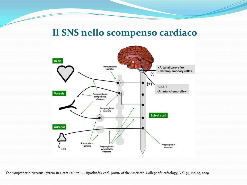 Il SNS nello scompenso cardiaco